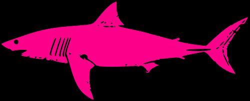 Shark Week atMurfie?